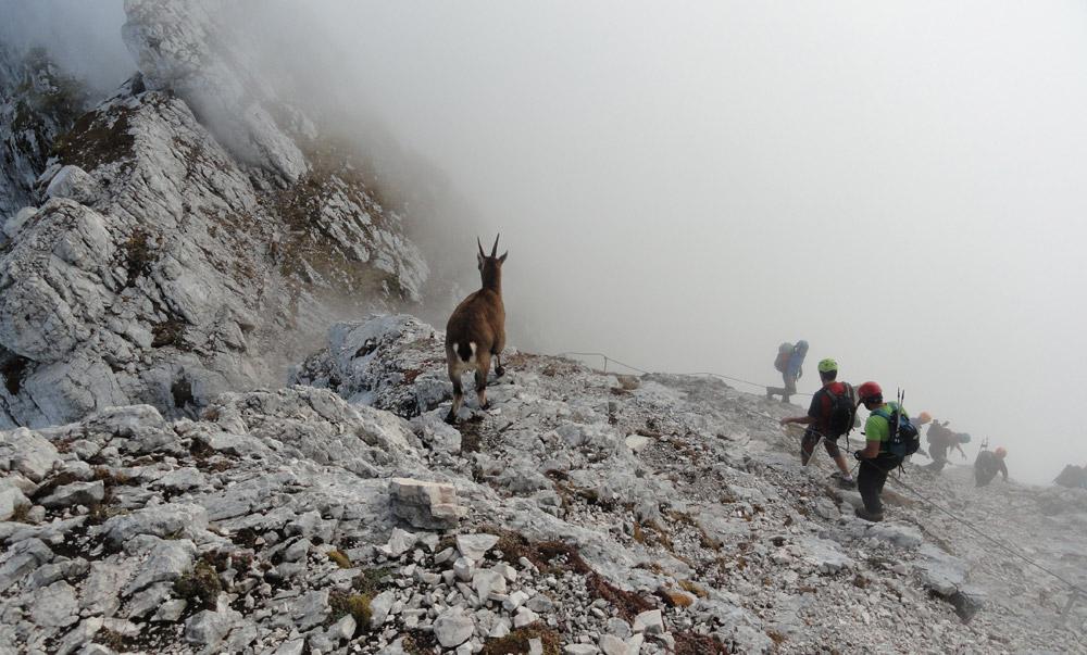 scala-pipan-con-alpinisti-e-stmbecco